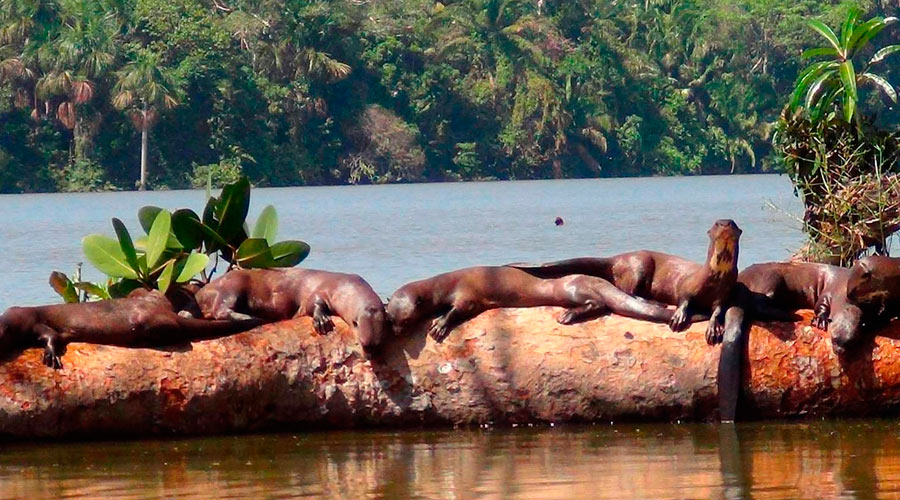 Tambopata National Reserve and the Beautiful Lake Sandoval