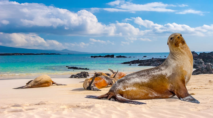 Frequently asked questions to travel to Galapagos