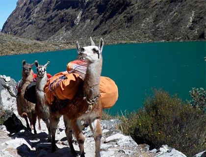 Luxury Lares 5 Day Lodge-to-Lodge Trek to Machu Picchu