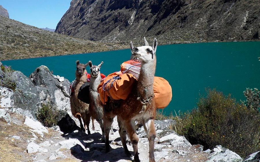 First Class Lares 7 Day Lodge-to-Lodge Trek to Machu Picchu